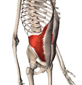 内腹斜筋,ウエスト,引き締め,体幹