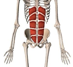 腹直筋,腹筋の種類,エクササイズ
