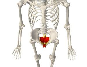 骨盤底筋群,エクササイズ,ひめトレ,大阪