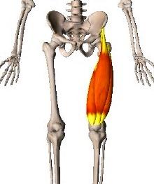 太ももの前,ストレッチ,反り腰,腰痛